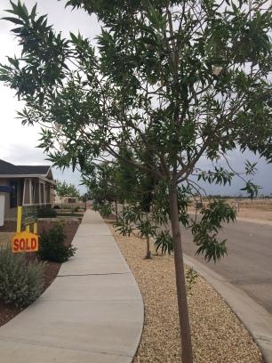 street tree side